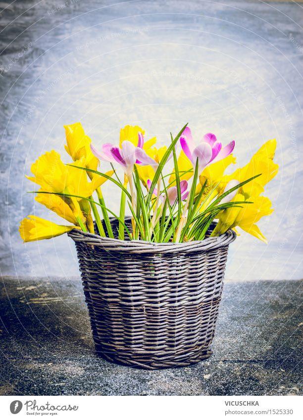 Frühlingsblumen im Blumentopf Stil Design Wohnung Innenarchitektur Dekoration & Verzierung Tisch Natur Pflanze Blüte Blumenstrauß Blühend gelb rosa Duft