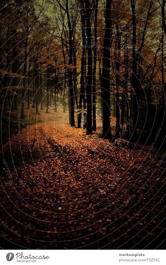 herbstwald Baum Blatt Wald dunkel Herbst Wege & Pfade Angst Panik mystisch herbstlich