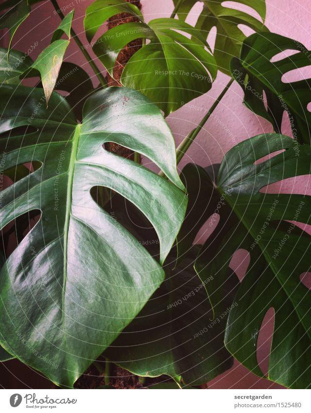 monstermässig! Lifestyle Häusliches Leben Wohnung Raum Pflanze Baum Blatt Grünpflanze Fensterblätter Wachstum glänzend retro grün rosa elegant Raufasertapete
