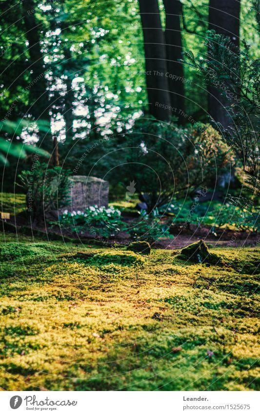 Sonnenschein auf dem Friedhof Natur nackt Pflanze grün Sommer Landschaft Umwelt gelb Herbst Frühling Gras Idee Schönes Wetter Rasen Moos Inspiration