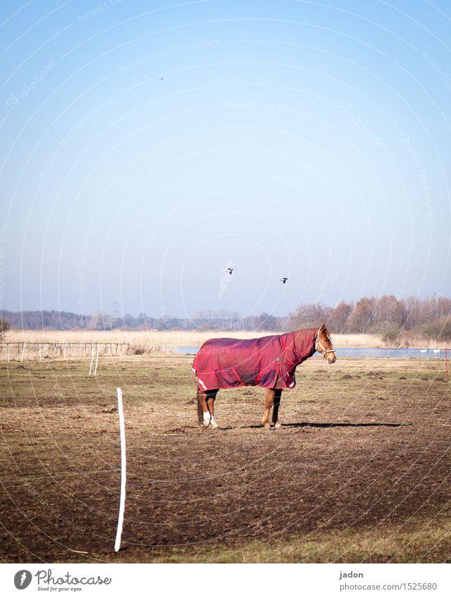 stehpferdchen. Natur Landschaft Tier Ferne Winter kalt Wärme Gras Freiheit fliegen Vogel Horizont stehen Bekleidung Pferd Weide