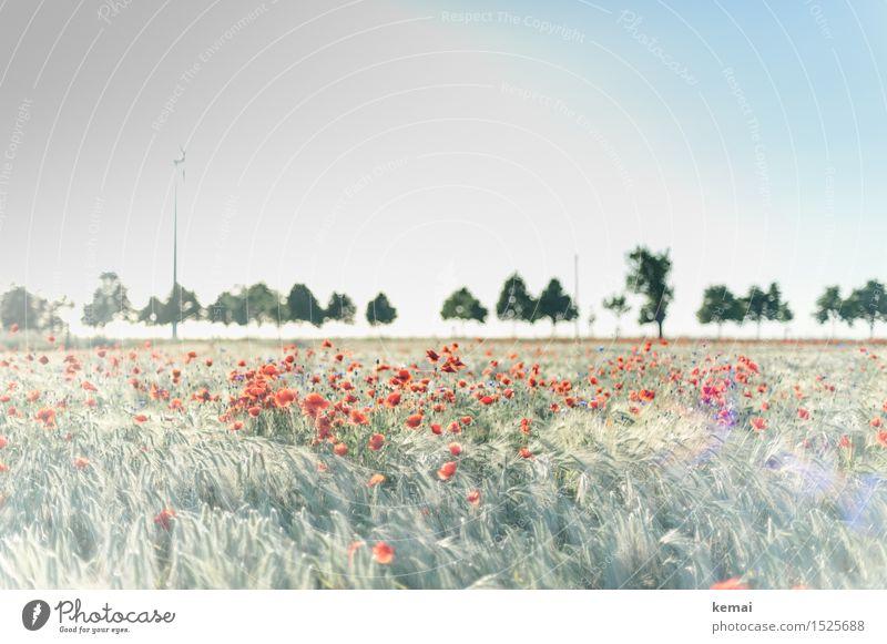 Spreedorado | Mohntagserwachen Natur Pflanze Sommer schön grün Sonne Baum Blume Landschaft rot Ferne Umwelt Wärme Blüte Freiheit hell