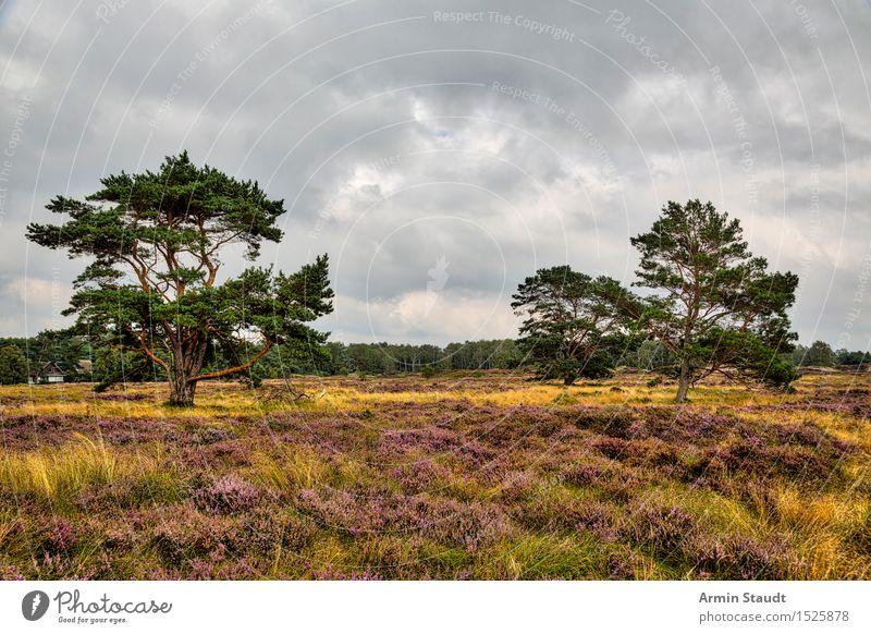 Heidelandschaft - HIddensee Himmel Natur Ferien & Urlaub & Reisen Sommer Wolken ruhig Ferne dunkel Wald Umwelt Leben Wiese natürlich Lifestyle Stimmung