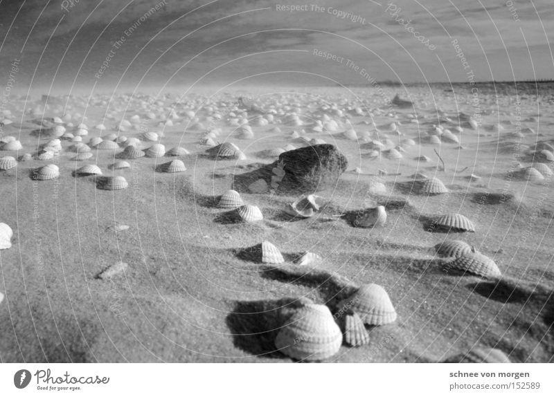 steine tönend Wasser Meer Strand Ferne Stein See Sand Küste Wind Wetter Kraft Muschel Schwarzweißfoto Geräusch