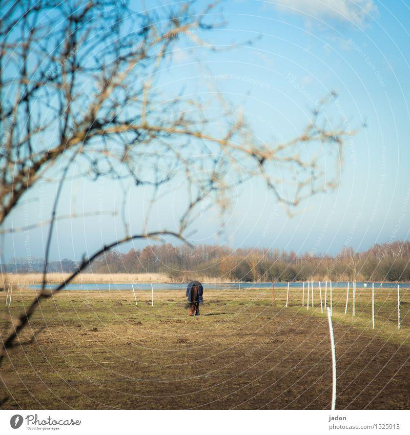 ein königreich und ein pferd. Wohlgefühl Umwelt Natur Landschaft Winter Baum Wiese Feld Tier Nutztier Pferd 1 Essen Fressen Gelassenheit Weide ponyhof Farbfoto