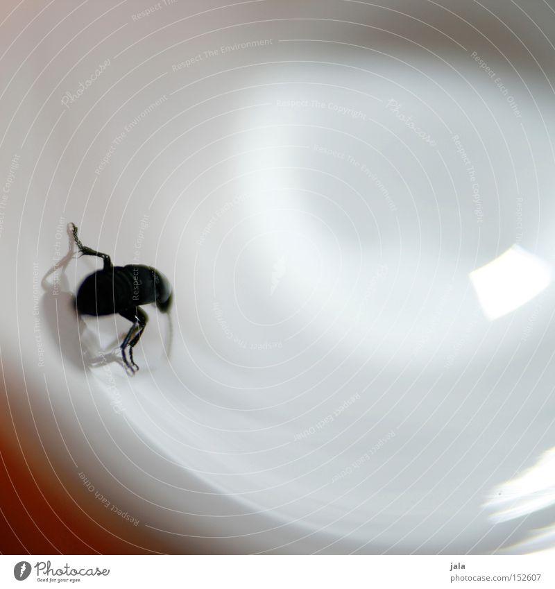 Bug Boy schwarz Glas Käfer Lichtspiel Sackgasse