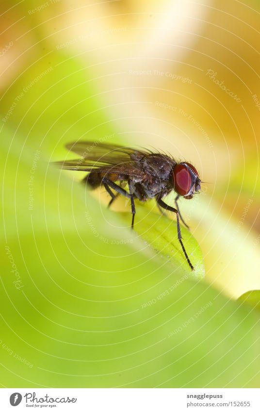 grün Blatt fliegen Behaarung Flügel