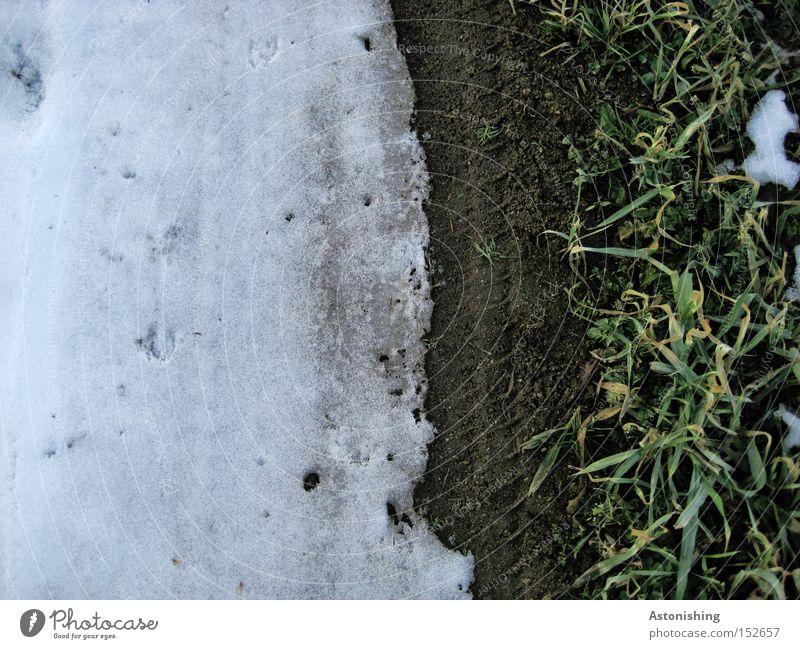 Schneefallgrenze weiß Winter dunkel Wiese Gras Eis hell dreckig Erde Frost Boden Bodenbelag Grenze Halm Schneedecke
