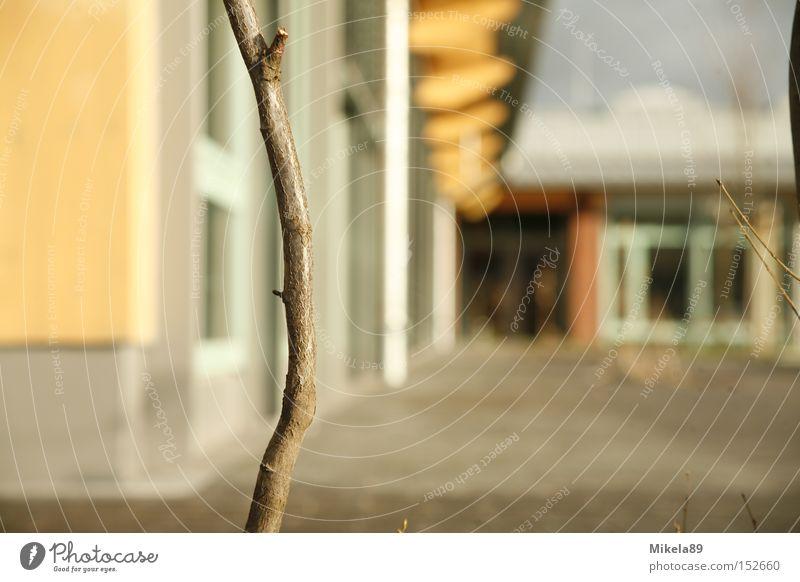Stock in der Einsamkeit Natur Haus Luft Trauer Ast Verzweiflung