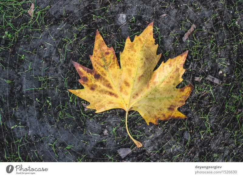 Herbstblatt auf Bürgersteig Natur Blatt Stadt Straße Stein alt gelb fallen Jahreszeiten Hintergrund Fliesen u. Kacheln Kopfsteinpflaster Straßenbelag Etage