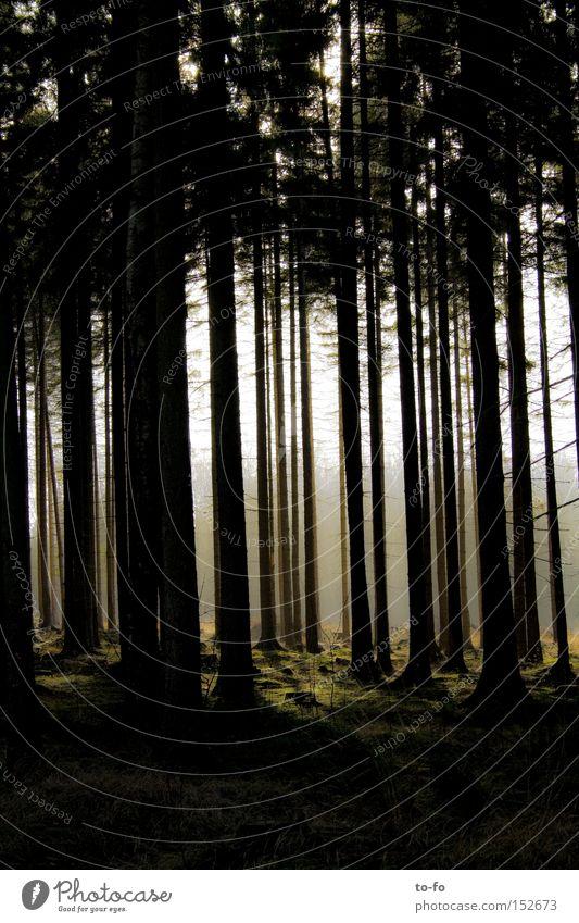 Wald Baum Winter ruhig Herbst Märchen Fichte