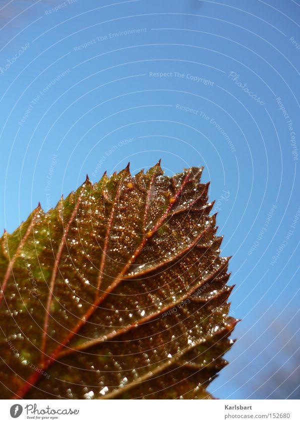 das tauen des blattes während des vorgangs des scheinens. Natur Himmel blau Winter Blatt Farbe kalt Herbst Farbstoff Wärme Eis braun Design Umwelt nass frisch