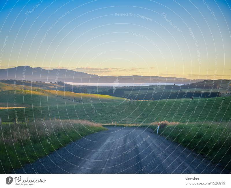 Guten morgen NZ Ferien & Urlaub & Reisen Ausflug Sommer Sommerurlaub Sonne Berge u. Gebirge Umwelt Natur Landschaft Pflanze Tier Erde Luft Wasser Himmel