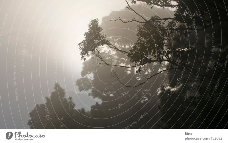 NebelReich Außenaufnahme Textfreiraum links Abend Schatten Kontrast Silhouette Sonnenstrahlen Gegenlicht Berge u. Gebirge Landschaft Pflanze Wolken