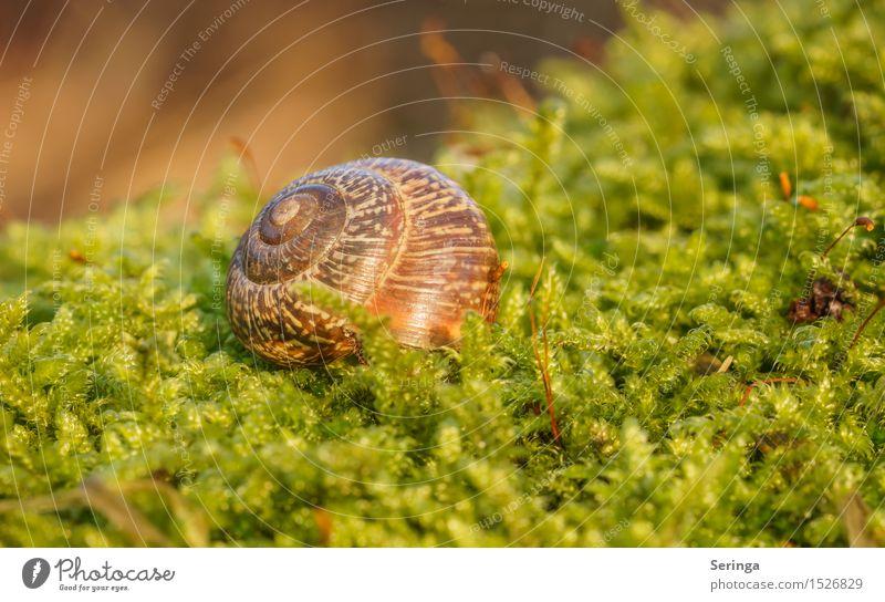 Eigenheim zu vermieten Natur Pflanze Tier Winter Moos Wald Wildtier Schnecke 1 schön Schneckenhaus krabbeln Spirale Farbfoto mehrfarbig Außenaufnahme