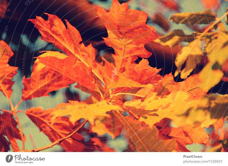 Herbst Natur Ferien & Urlaub & Reisen Pflanze schön Baum Erholung Landschaft Wald Stimmung orange träumen Tourismus Zufriedenheit Wachstum wandern