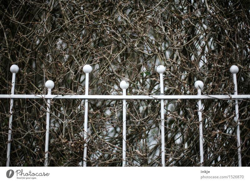  i i i i  Herbst Winter Hecke Sträucher Menschenleer Garten Metallzaun Ornament Linie Kugel Gitter dunkel trist braun weiß Grenze Farbfoto Gedeckte Farben