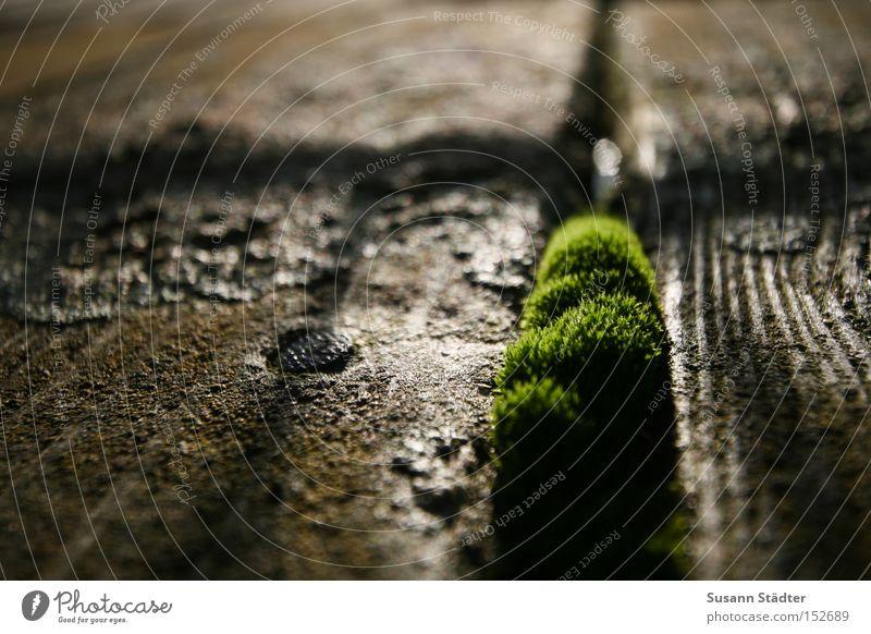 ohne Moos nix los! Steg Meer grün Wachstum Frühling Blühend Holz feucht Furche kalt Natur Spaziergang Makroaufnahme Nahaufnahme