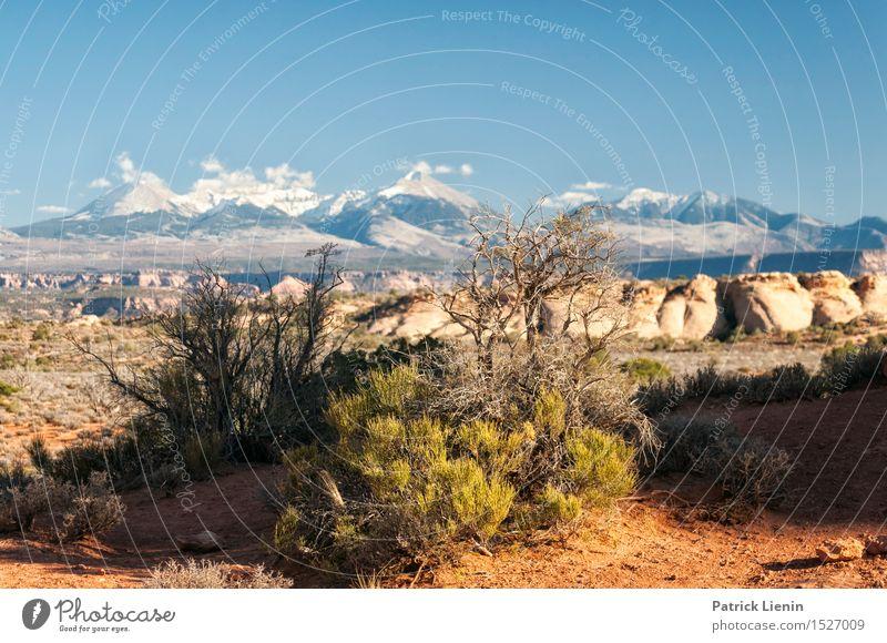 Natur Ferien & Urlaub & Reisen Pflanze blau Sommer Baum Landschaft Berge u. Gebirge Felsen Sträucher USA Abenteuer Schutz Fernweh ökologisch abgelegen
