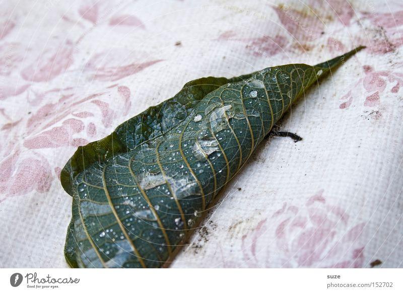 Herbstrolle Natur Wassertropfen Blatt authentisch natürlich trist grün Stimmung Traurigkeit Sorge Trauer Tod Schmerz Einsamkeit Verfall Vergänglichkeit
