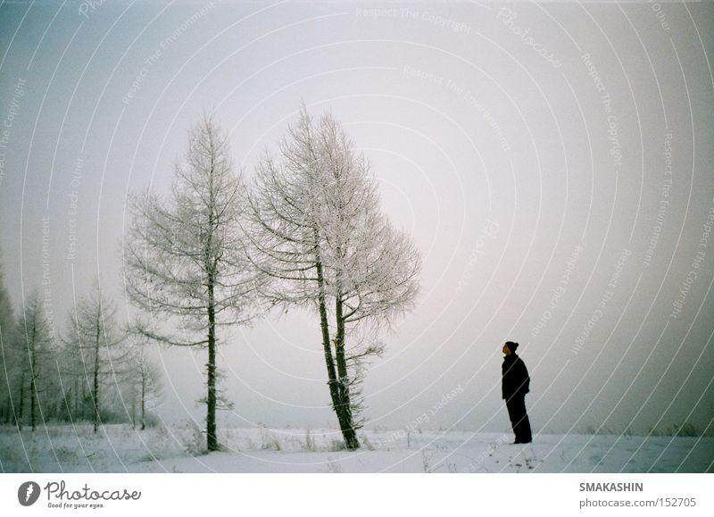 Baum Winter schwarz kalt Schnee Eis Sturm Russland Sibirien Stauanlage