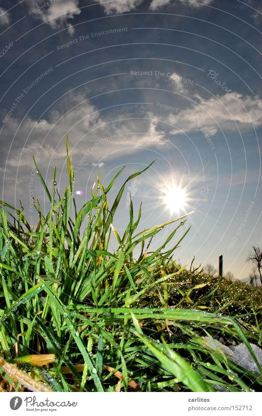 Grün und Blau schmückt die Sau vorhersagen Reifezeit Gras Wiese Froschperspektive Gegenlicht Frühling Wetter es geht bergab Wiedervereinigung Trendwende
