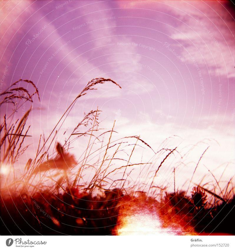 Sommerbrise Wiese Gras violett Holga Himmel Pflanze Wärme Sonne Halm Natur Kontrast Wolken fehlerhaft schön Lomografie Lichtfleck