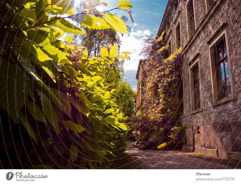 biologische Fakultät der MLU in Halle Sommer Garten Haus Vorgarten historisch Romantik Verhext Hecke Nachmittag Sonne positiv Optimismus Optimist Licht Schatten
