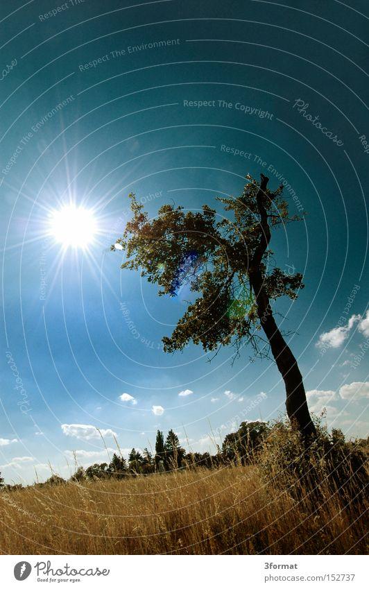 Baum Sommer Feld Länder Grundbesitz Wiese Himmel blau gelb Sonne einzeln Einsamkeit Leben blenden stehen Langeweile