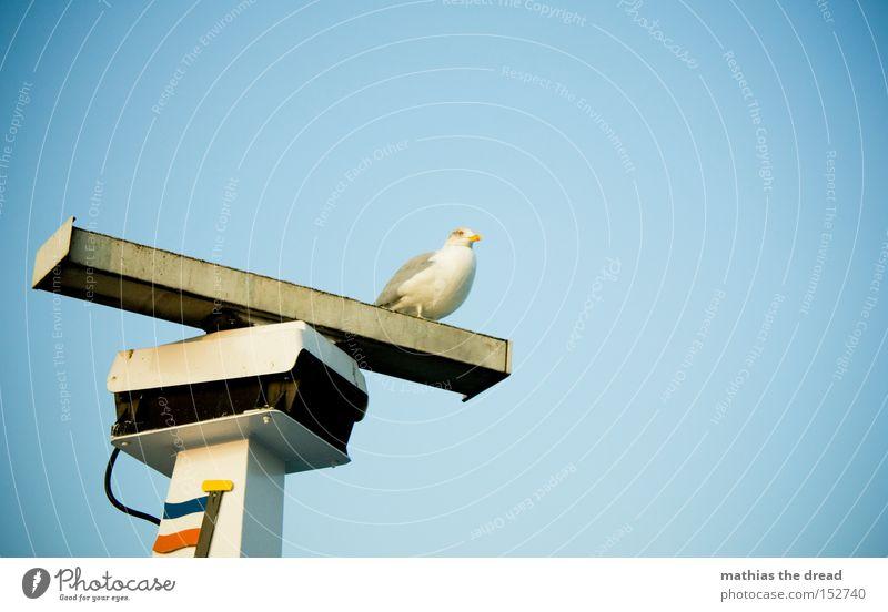 AUSSICHT schön Himmel Meer blau Strand Einsamkeit oben Wasserfahrzeug Vogel warten sitzen drehen Schifffahrt Schönes Wetter Möwe Radarstation