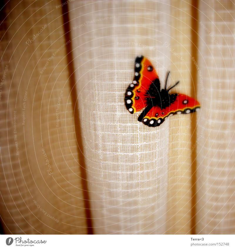 J'ai des butterfly... Schmetterling Gardine Vorhang Falte Tier Insekt Flügel flattern Kitsch orange schwarz Admiral Fühler Licht Wärme Frühling