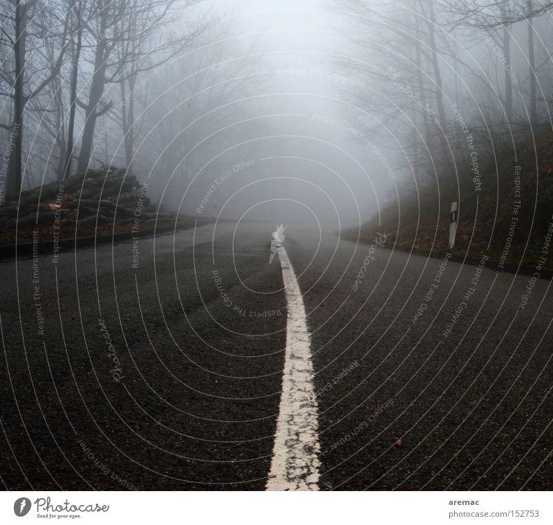 Fernsicht Straße Nebel Linie geradeaus Stimmung fahren KFZ Wege & Pfade Verkehrswege Herbst