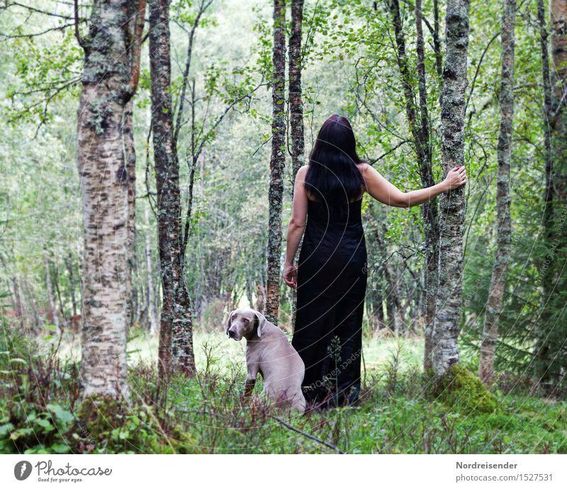 Zwischen Birken Frau Mensch Ferien & Urlaub & Reisen Natur Hund Baum Erholung Tier ruhig Wald Ferne Erwachsene Wege & Pfade feminin Gras Freiheit