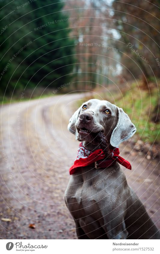 Spaziergang Spielen Ausflug wandern Natur Landschaft Baum Wald Straße Wege & Pfade Tier Haustier Hund Lächeln warten Coolness Freundlichkeit Fröhlichkeit loyal