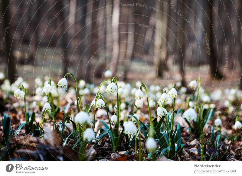 Frühlingswald Ausflug Natur Landschaft Pflanze Erde Klima Baum Blume Wildpflanze Wald Blühend Duft Freundlichkeit Fröhlichkeit ruhig Hoffnung Idylle Stimmung