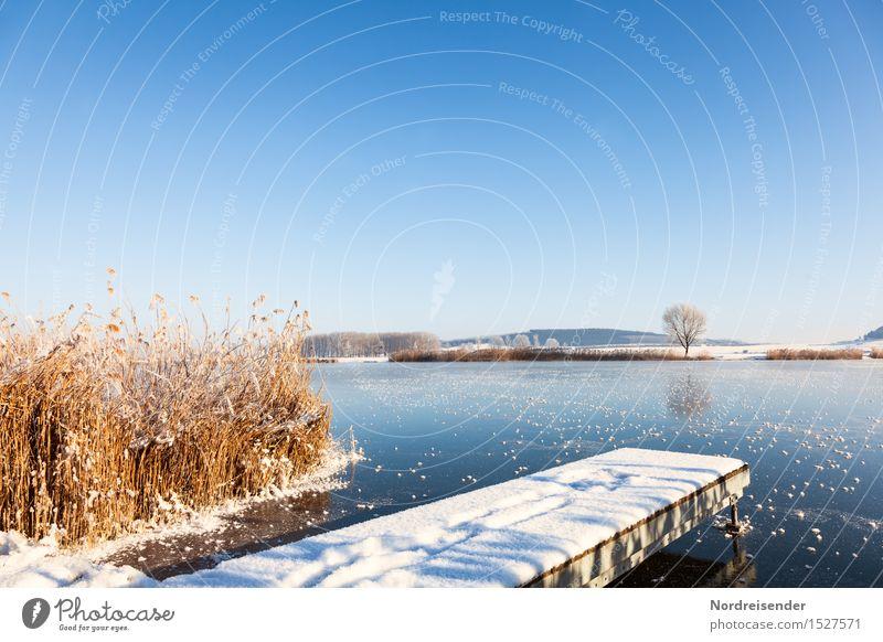 Frost Winter Schnee wandern Natur Landschaft Pflanze Himmel Wolkenloser Himmel Klima Schönes Wetter Eis Gras Küste See frieren glänzend Freundlichkeit frisch
