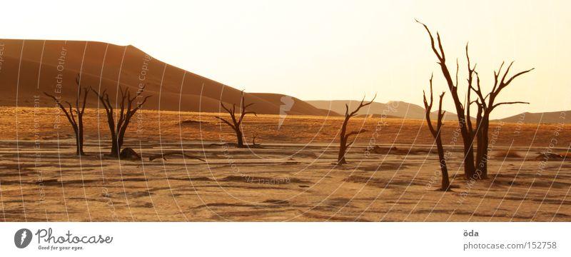Desertification Wüste Baum Tod vertrocknet trocken Schatten Zweig Ast Namibia Einsamkeit Düne Umweltverschmutzung Afrika