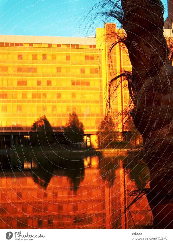 Palmen in Berlin Sonnenuntergang Gebäude Platz Fototechnik Wasser Wasseroberfläche Wasserspiegelung Spiegelbild Menschenleer Abenddämmerung Potsdamer Platz