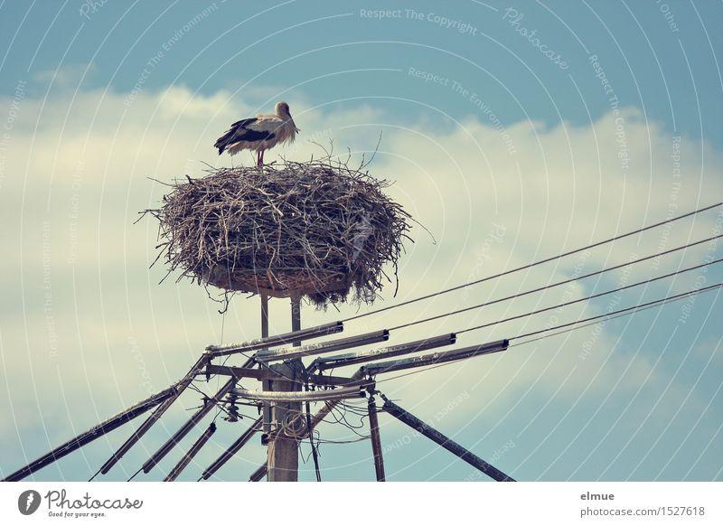 Der mit der langen Leitung. Kabel Himmel Wolken Frühling Schönes Wetter Vogel Storch Weißstorch Adebar Klapperstorch beobachten stehen warten ästhetisch Glück