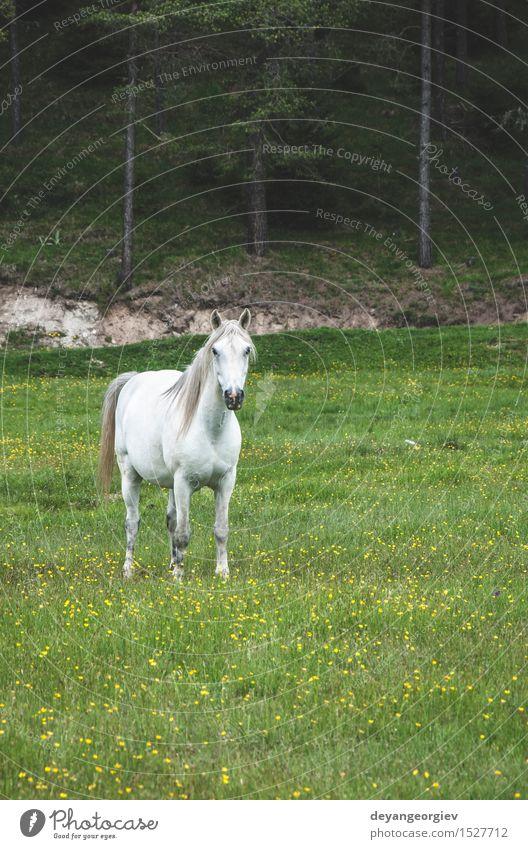 Pferde im Wald auf der grünen Wiese schön Sommer Natur Landschaft Tier Baum Gras Fressen wild blau braun Hengst Feld Reiten Sonnenuntergang Weide Außenaufnahme