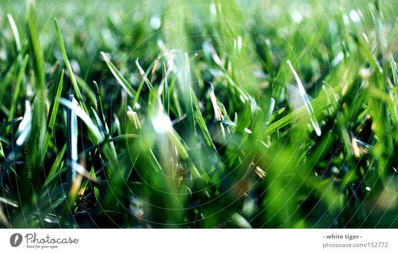 Nicht Reinbeißen! Natur grün schön Sommer Wiese Gras Schönes Wetter Halm grasgrün