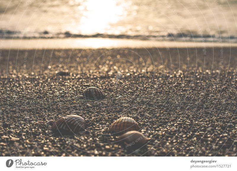 Muscheln am Strand exotisch schön Leben Ferien & Urlaub & Reisen Sommer Meer Natur Sand Küste natürlich weiß Miesmuschel Hintergrund Panzer tropisch marin