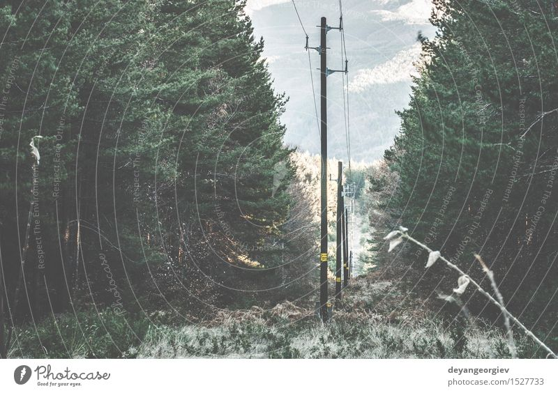 Vintage elektrische Stangen Industrie Telefon Technik & Technologie Natur Himmel Wald Holz Linie alt retro blau Energie Mast altehrwürdig Kraft Höhe Draht