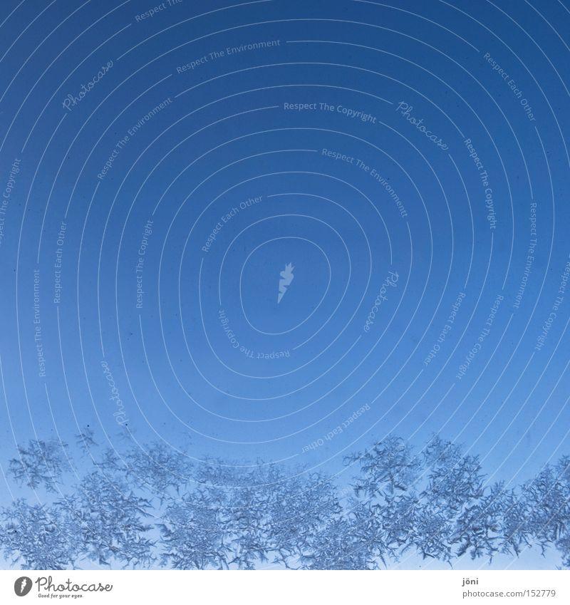 eisige Blumen schön blau Winter kalt Fenster Eis frisch Stern (Symbol) Frost fantastisch bizarr Eisblumen