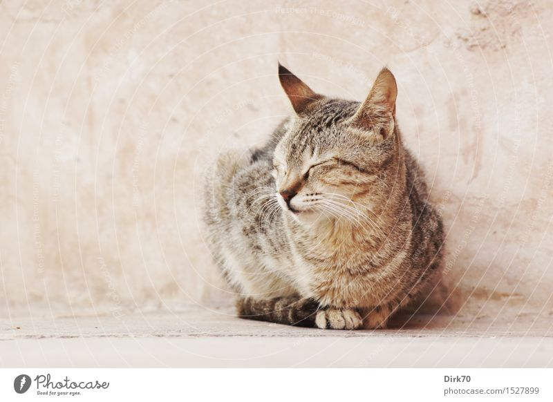 Relax! Ferien & Urlaub & Reisen Winter Schönes Wetter Abu Dhabi Vereinigte Arabische Emirate Asien Stadt Haus Mauer Wand Lehmwand Haustier Katze Tigerkatze 1