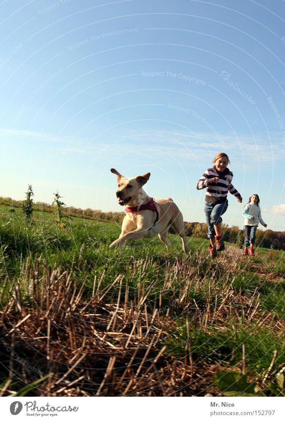 erster.zweiter.dritter. Tier Hund Haustier Golden Retriever Freundschaft Hunderennen Spaziergang Freiheit Säugetier Freude Kind hinterherlaufen Bewegung trio