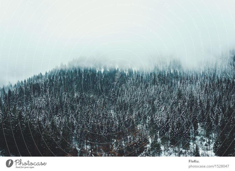 Wolkendecke im Schwarzwald Himmel Natur Ferien & Urlaub & Reisen grün weiß Baum Landschaft Winter dunkel Wald Berge u. Gebirge kalt Umwelt Schnee natürlich grau