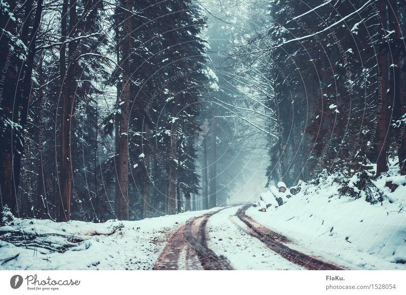 Nebel im Schwarzwald Winter Schnee Winterurlaub Berge u. Gebirge wandern Umwelt Natur Landschaft schlechtes Wetter Eis Frost Baum Wald Verkehrswege Straße