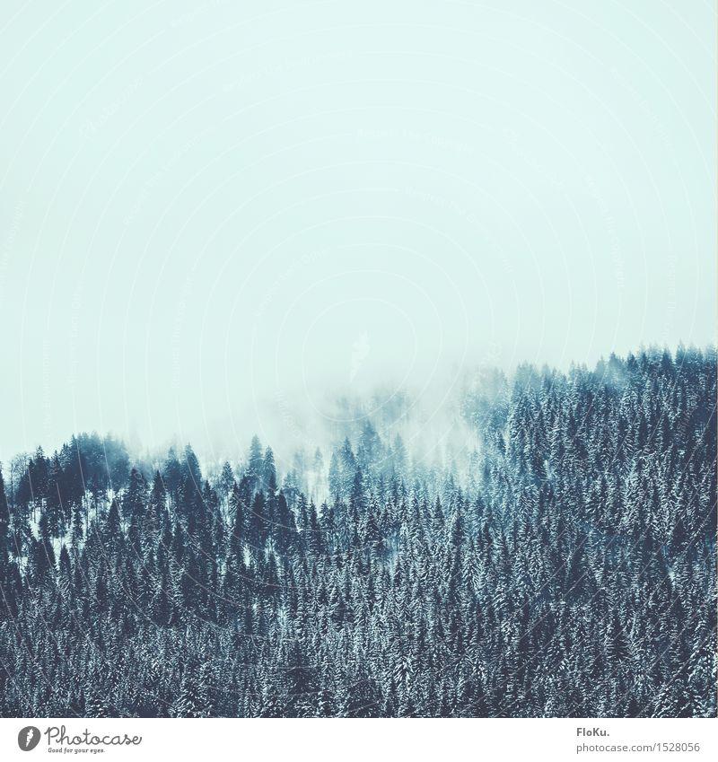 Wolkenumschlungen Winter Schnee Winterurlaub Berge u. Gebirge wandern Umwelt Natur Landschaft Urelemente Luft Himmel Wetter schlechtes Wetter Nebel Eis Frost