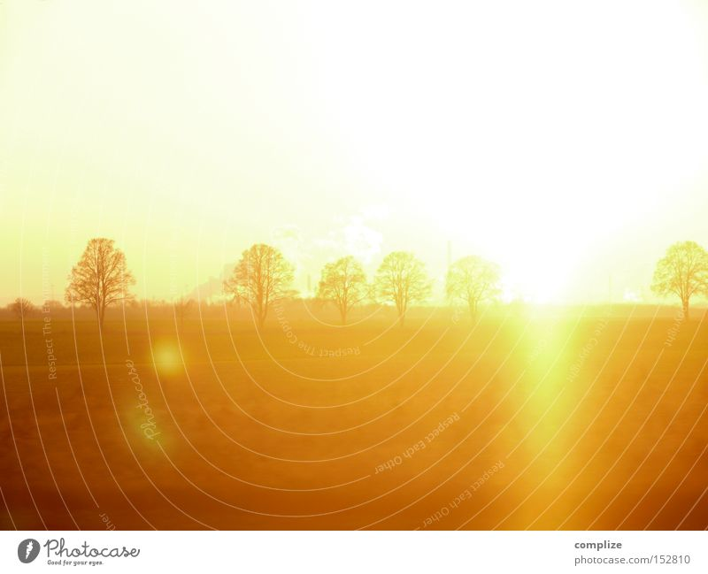 Dezember Gold Natur Baum Sonne Winter Ferne gelb träumen Horizont Beleuchtung orange Feld gold mehrere Sonnenuntergang Strahlung herbstlich